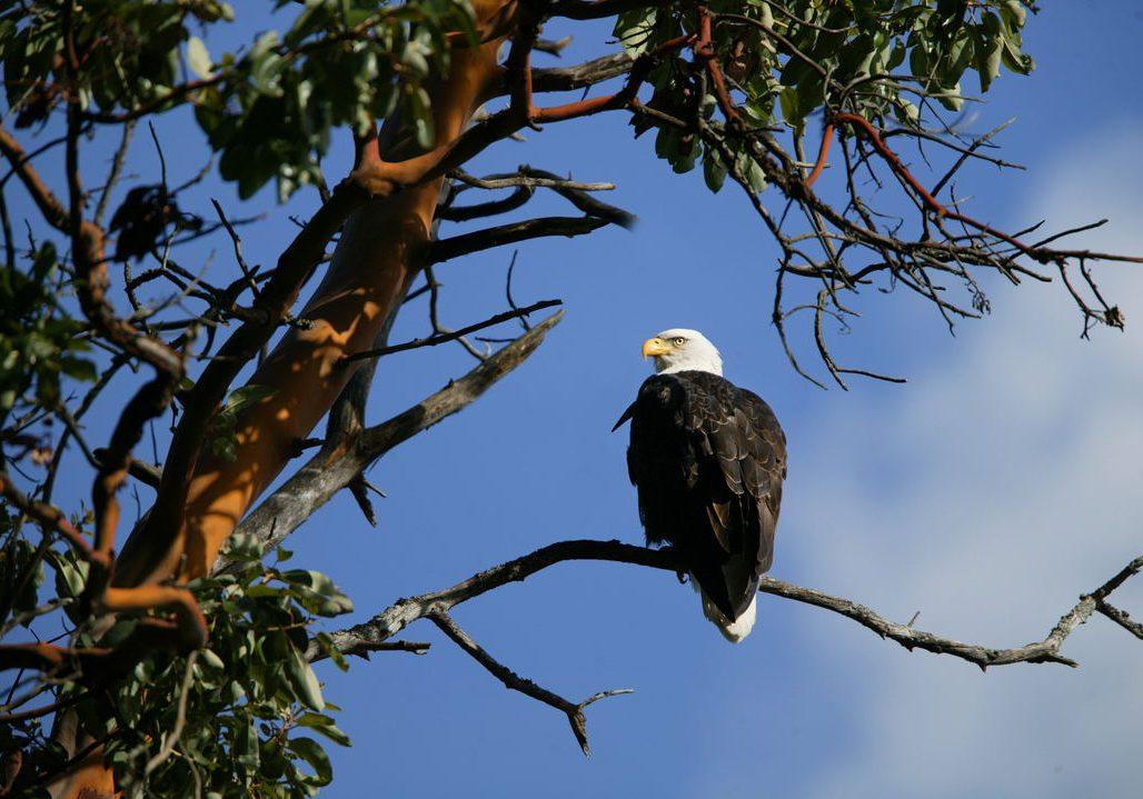 BIW Martin Bydalek eagle andy moore